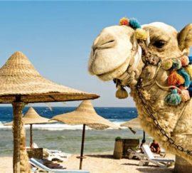 В октябре туристы из РФ отправятся в Египет