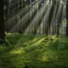 Международные эксперты оценили стоимость российских лесов